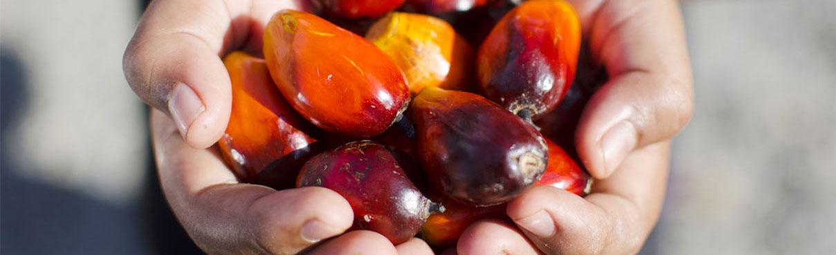 AFAMSA fabricante de grasa de palma