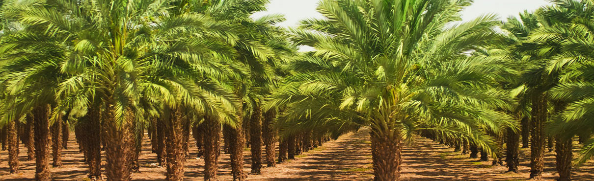 Grasas de palma AFAMSA
