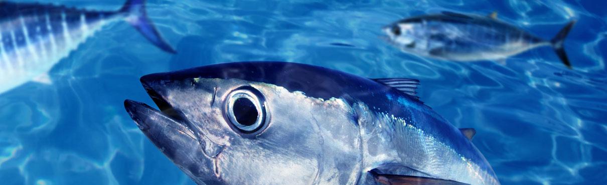 Aceites de pescado AFAMSA